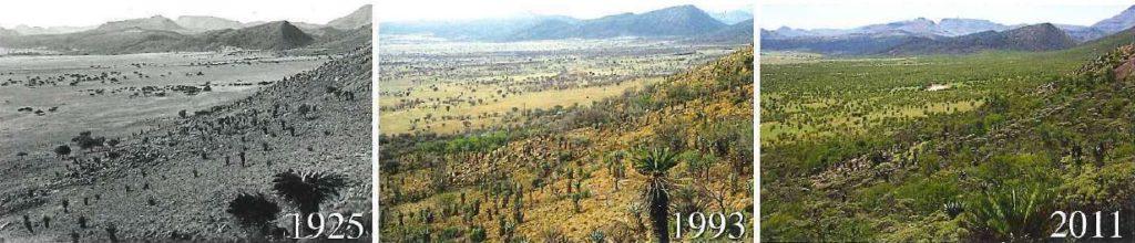 NGOs fordern vom Entwicklungsminister Müller: Kein Namibia-Holz für Kohle-Ausstieg – Kein Greenwashing bei der Energiewende!